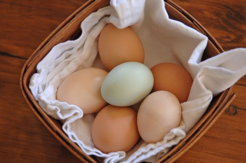Eggs in basket 1