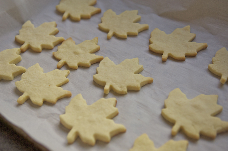 Maple sugar cookies 2